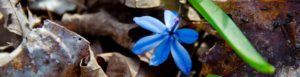 aromas flor azul productos