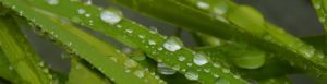 hojas mojadas